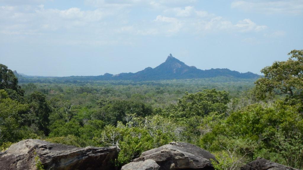 ベースキャンプ一帯の密林。遠方の山はチムニーガラ(1056m)。