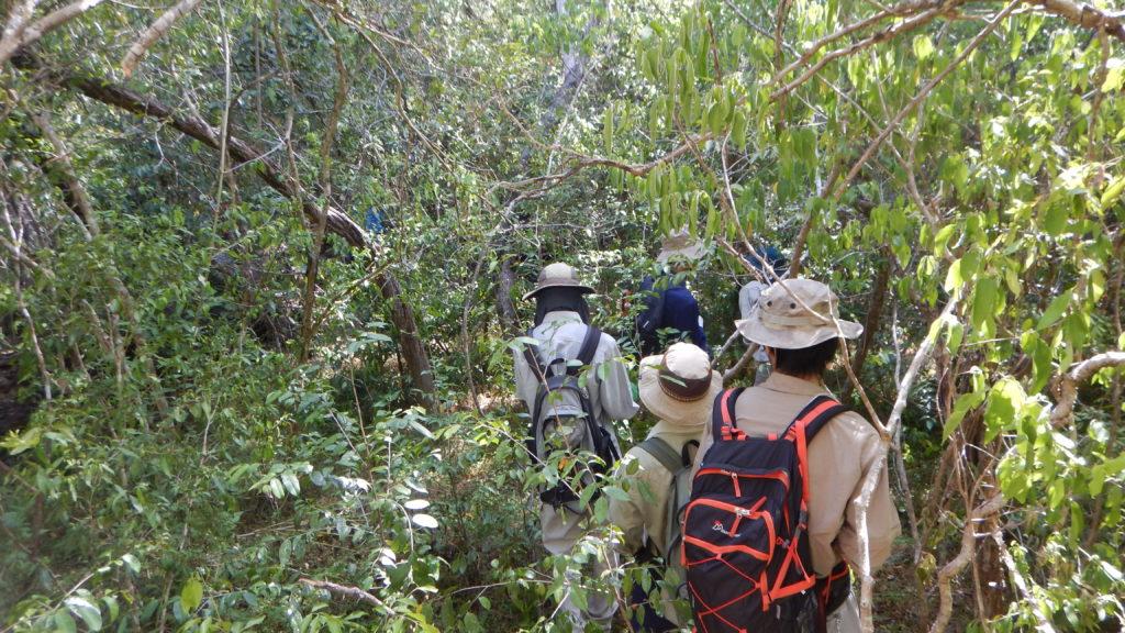 獣道(象の道)を選んで密林に分け入る探査隊、茨の下生えで前進に苦労する。